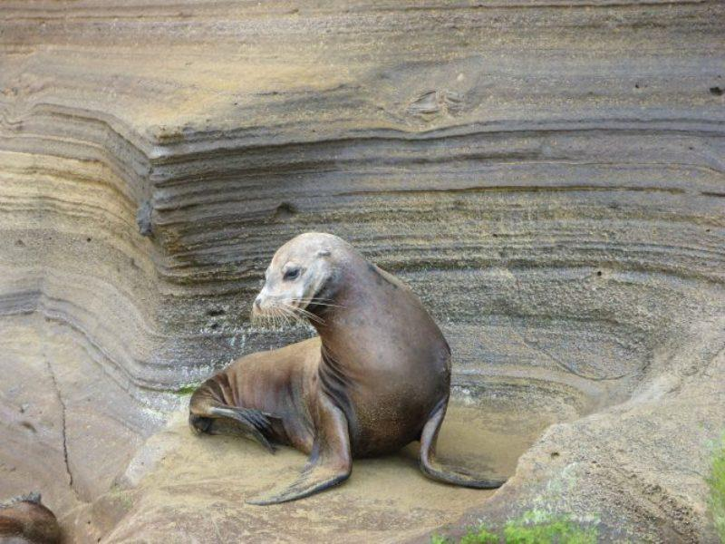 Lovely sea lion Punta Pitt - photo © Jane and Russell Poulston