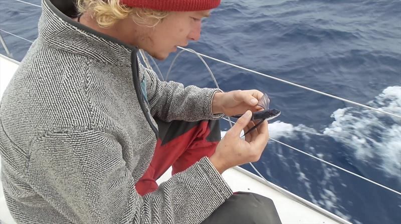 Charlie inspecting a flying fish - photo © Mission Ocean