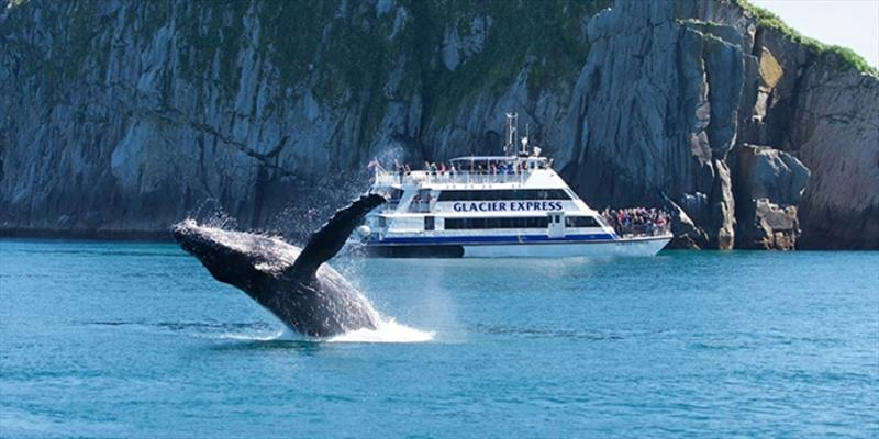 A whale watching tour in Juneau, Alaska.  Be sure to use cruise operators who follow rules for watching wildlife from a safe distance - photo © NOAA Fisheries