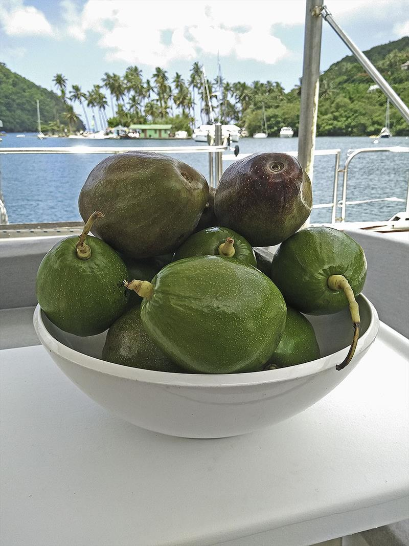 The huge bowl of delicious avocadoes from Castries - photo © Mission Océan