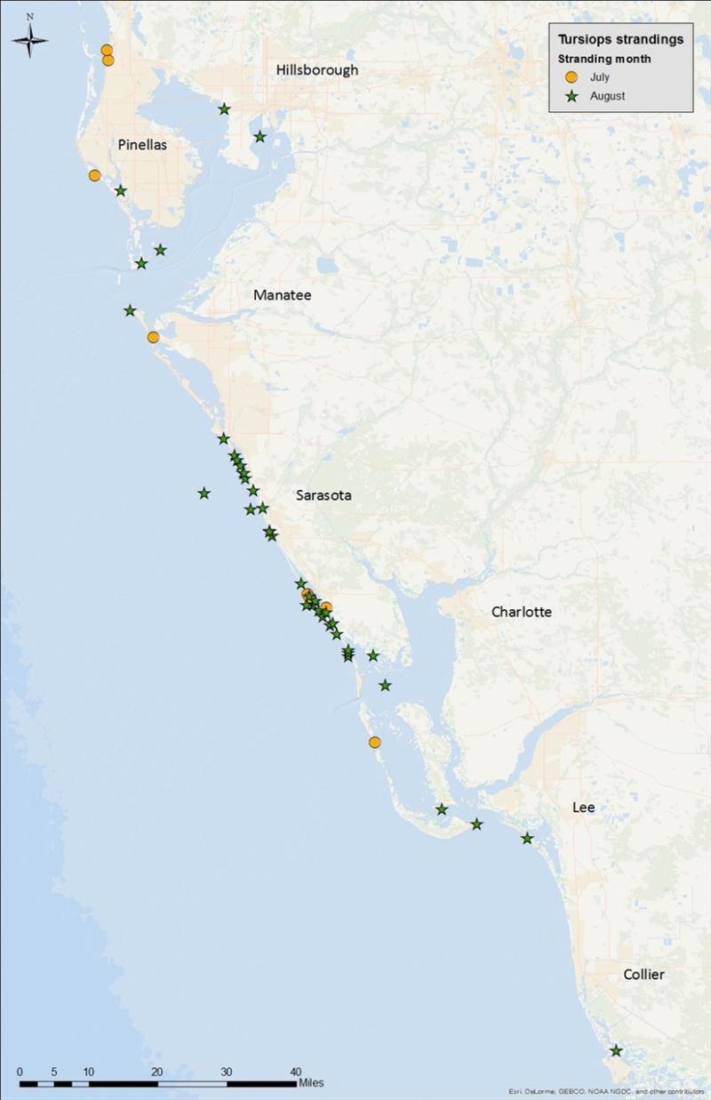 Map Southwest Florida.Map Of Bottlenose Dolphin Strandings In Southwest Florida Since July 1st