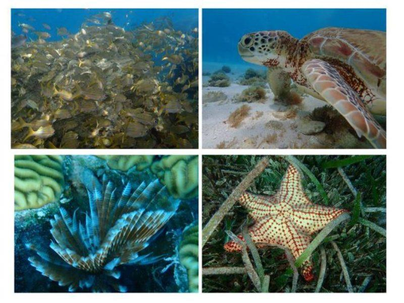 Lots of marine life and snorkeling opportunities in crystal clear waters. - photo © Rod Morris