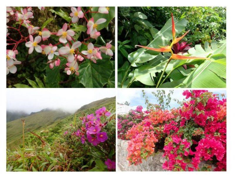 Beautiful flowers and incredible hiking terrain in the Islands that touch the clouds. - photo © Rod Morris