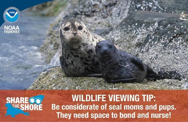 Wildlife viewing tip postcard - photo © NOAA Fisheries