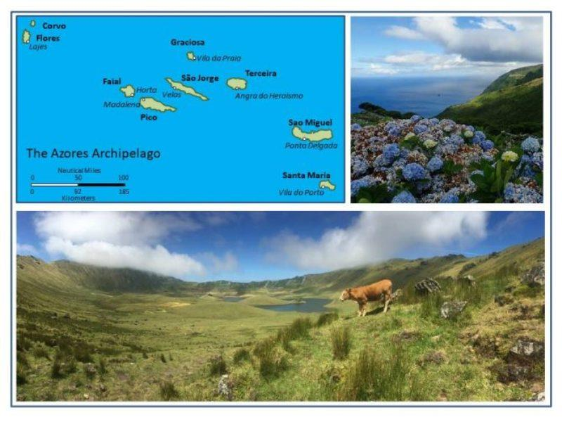 The Azores Archipelago. Hydrangeas cover hand piled lava rock walls on Flores. The Caldera on Corvo with interior lakes, hydrangea covered walls, and cattle grazing. - photo © Rod Morris