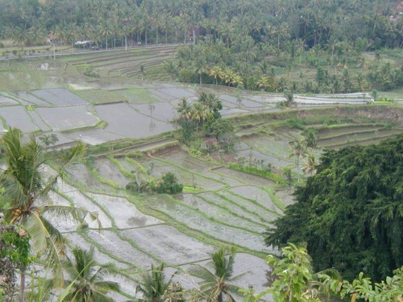 Rice paddies - photo © Hugh & Heather Bacon