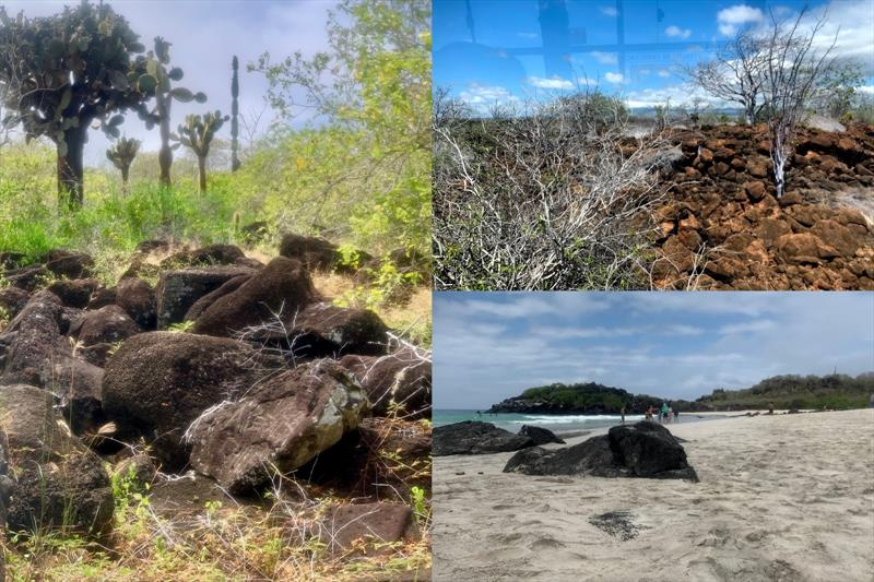Various vegetation and landscape - photo © SV Taipan