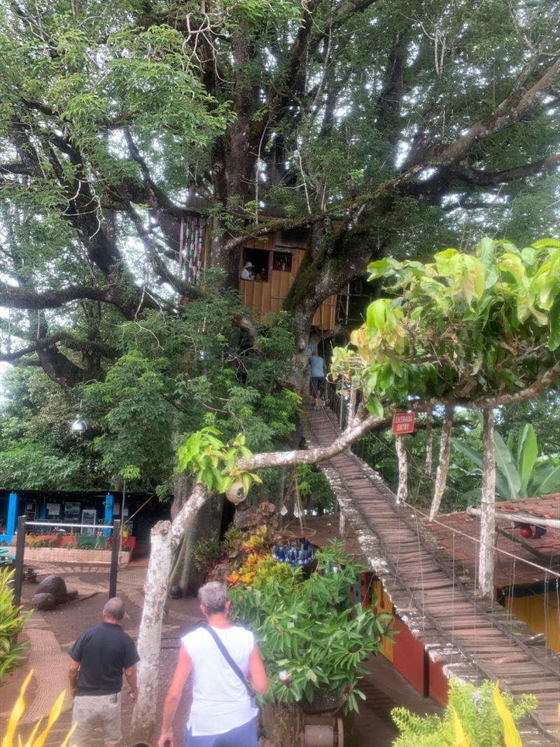 Treehouse in a 300 year old Ficus - photo © SV Taipan