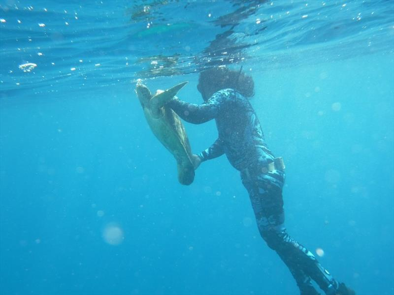 Freediving expert Jessy Hapdei with a green turtle hand captured in the waters of Saipan, CNMI. - photo © NOAA Fisheries