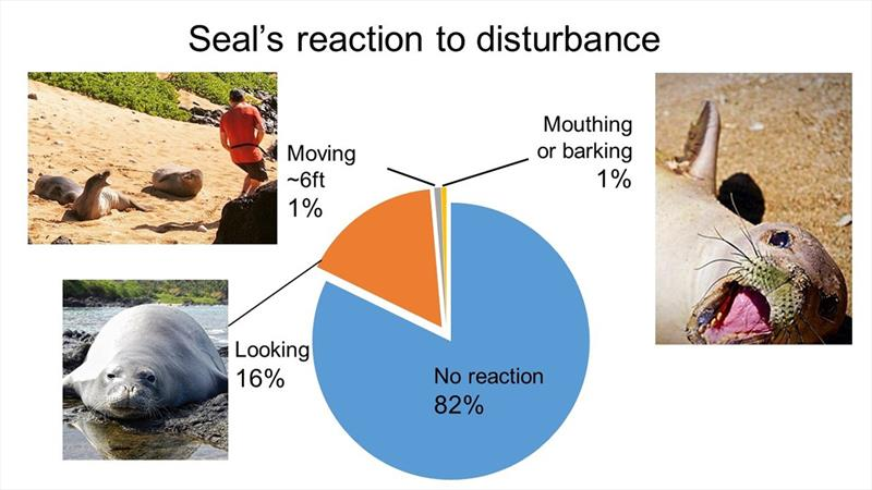 Seals reacted to human disturbance in nearly 18% of social media posts in this study. Reactions divided into 3 categories—moving away from photographer/ person in frame, making a defensive gesture like mouthing or barking, & looking at person or camera. - photo © NOAA Fisheries
