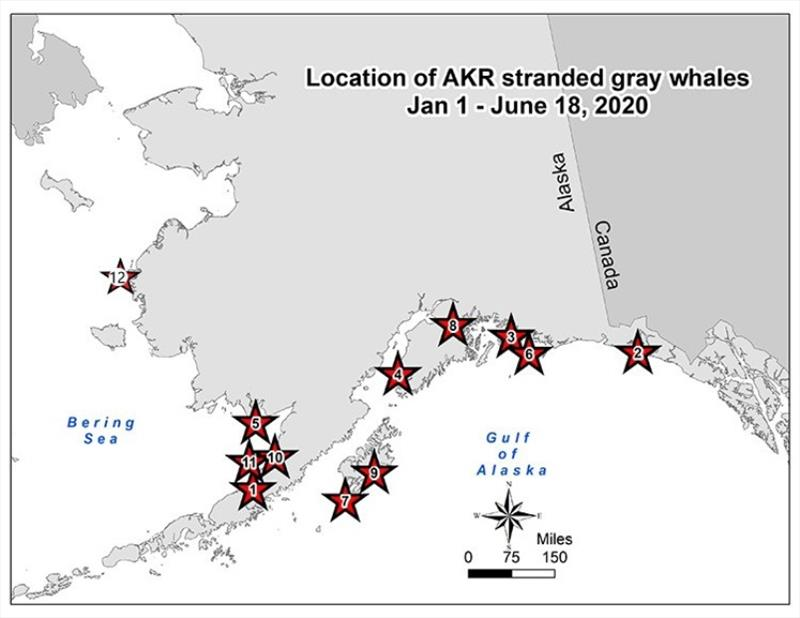 Location of AKR stranded gray whales - photo © NOAA Fisheries