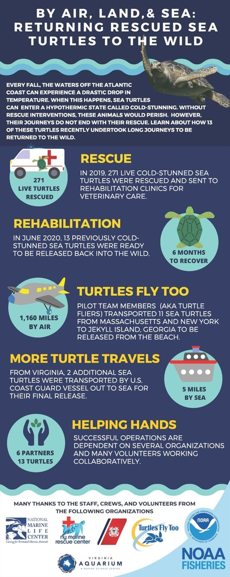 Returning rescued sea turtles to the wild by land, air, and sea - photo © NOAA Fisheries