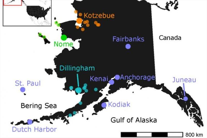 Alaska food banks and food distribution center locations. Large purple circles are locations of food banks that get donations directly from SeaShare. Smaller colored circles get donations from distribution locations denoted by larger circles of same color photo copyright NOAA Fisheries taken at